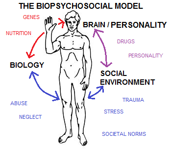biomedical and biopsychosocial models of care Biopsychosocial vs biomedical  wellness is more than just absence of disease and one of the greatest strengths of the biopsychosocial method is preventive care.