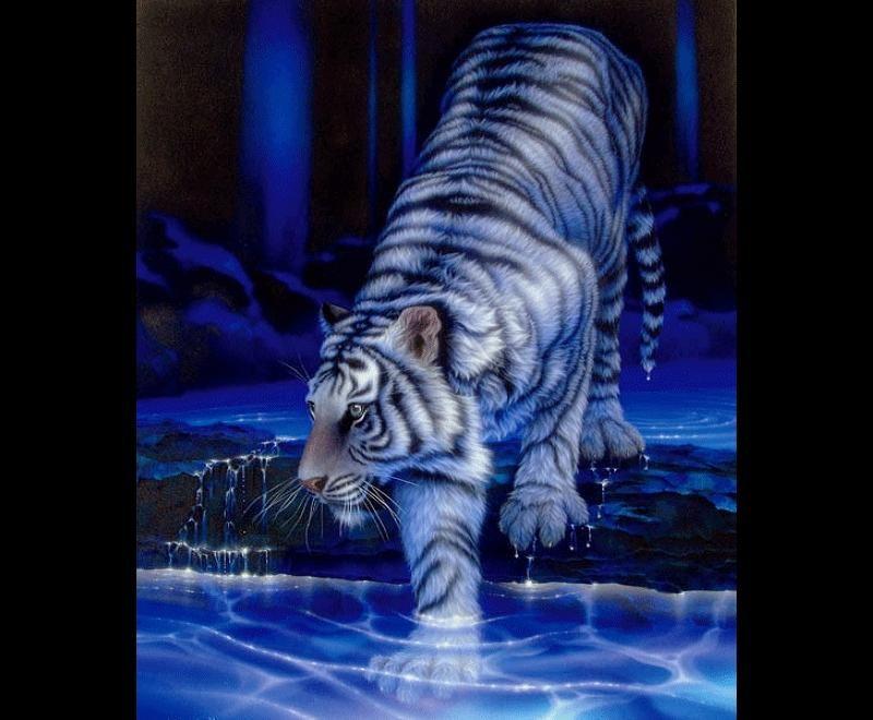 Chinese White Tiger Drawing
