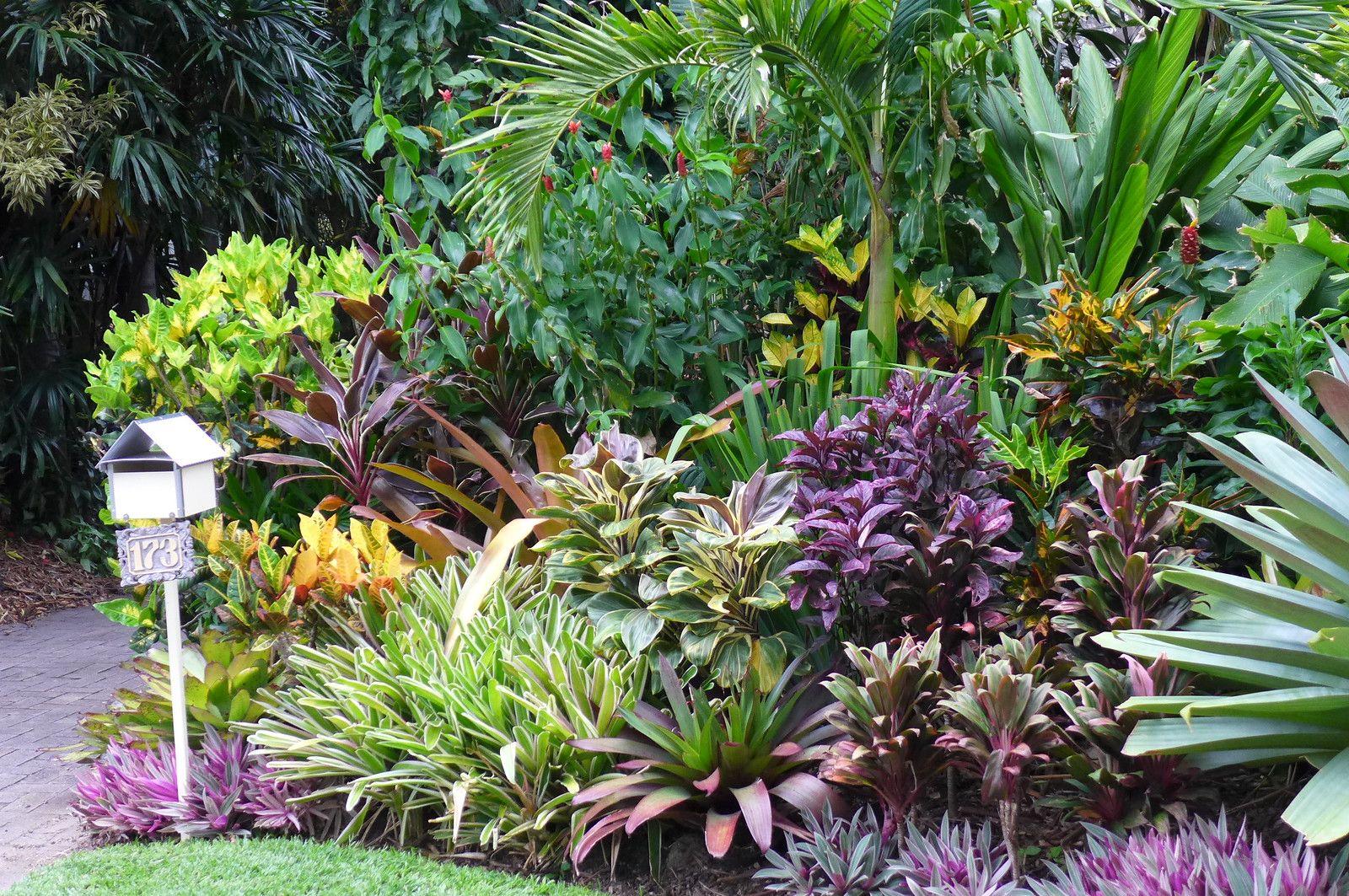 Front garden | Tropical garden design, Small tropical ...