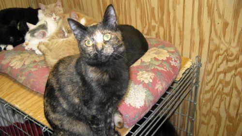 Adopt Jasmine On Old Cats Cute Animals Adoption