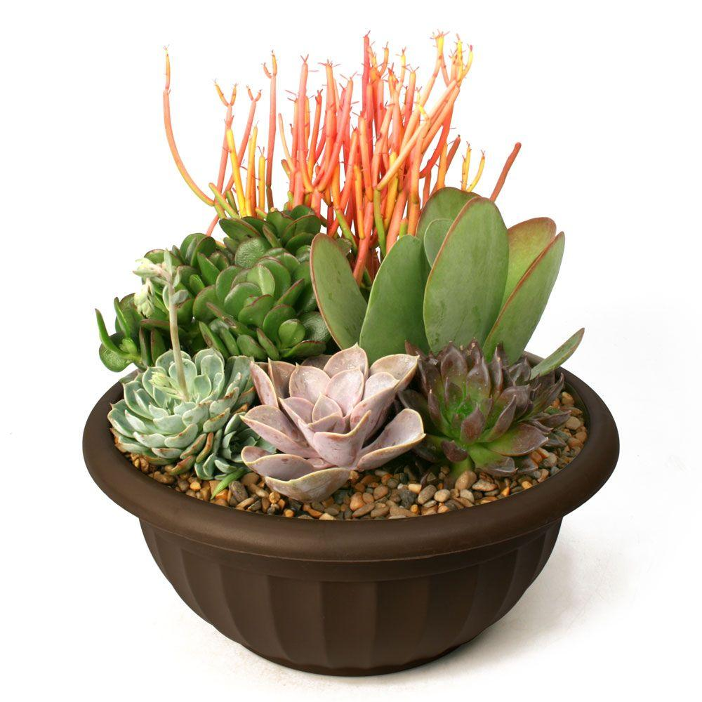 Succulent Garden Plant Your Own Kit 0881011 The Home Depot Succulents Plants Succulents Garden