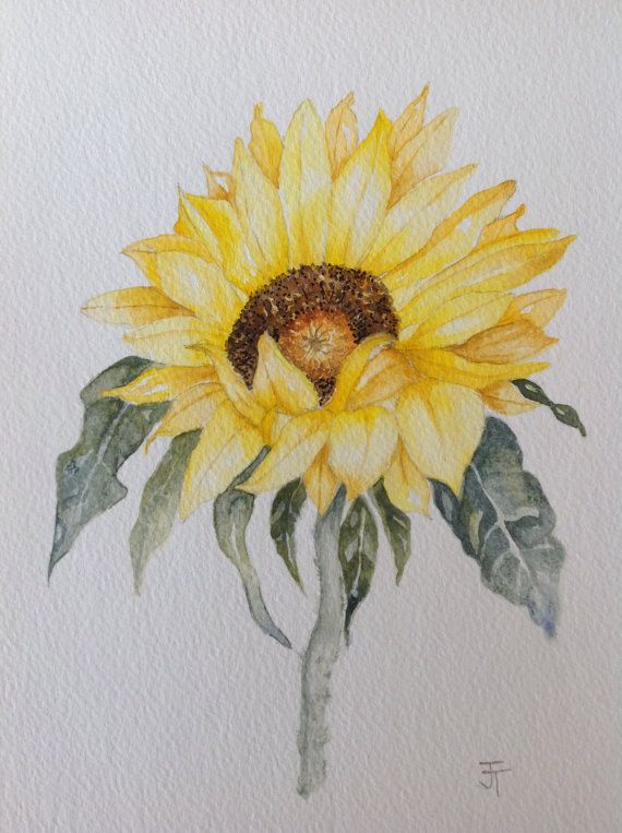 Original Watercolour Painting Of Sunflower Wall Art Kitchen