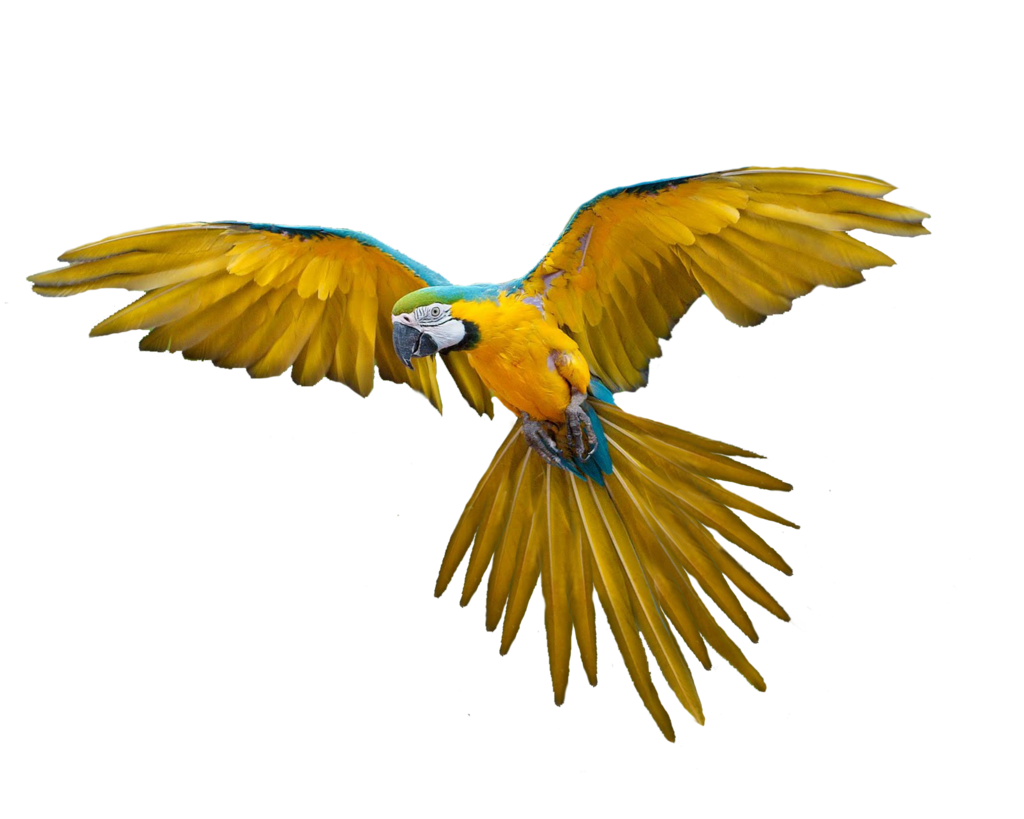 Png Bird By Moonglowlilly On Deviantart Parrot Flying Bird Parrot
