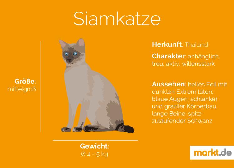 Siamkatze Charakter Haltung Pflege Herkunft Siam Katzchen