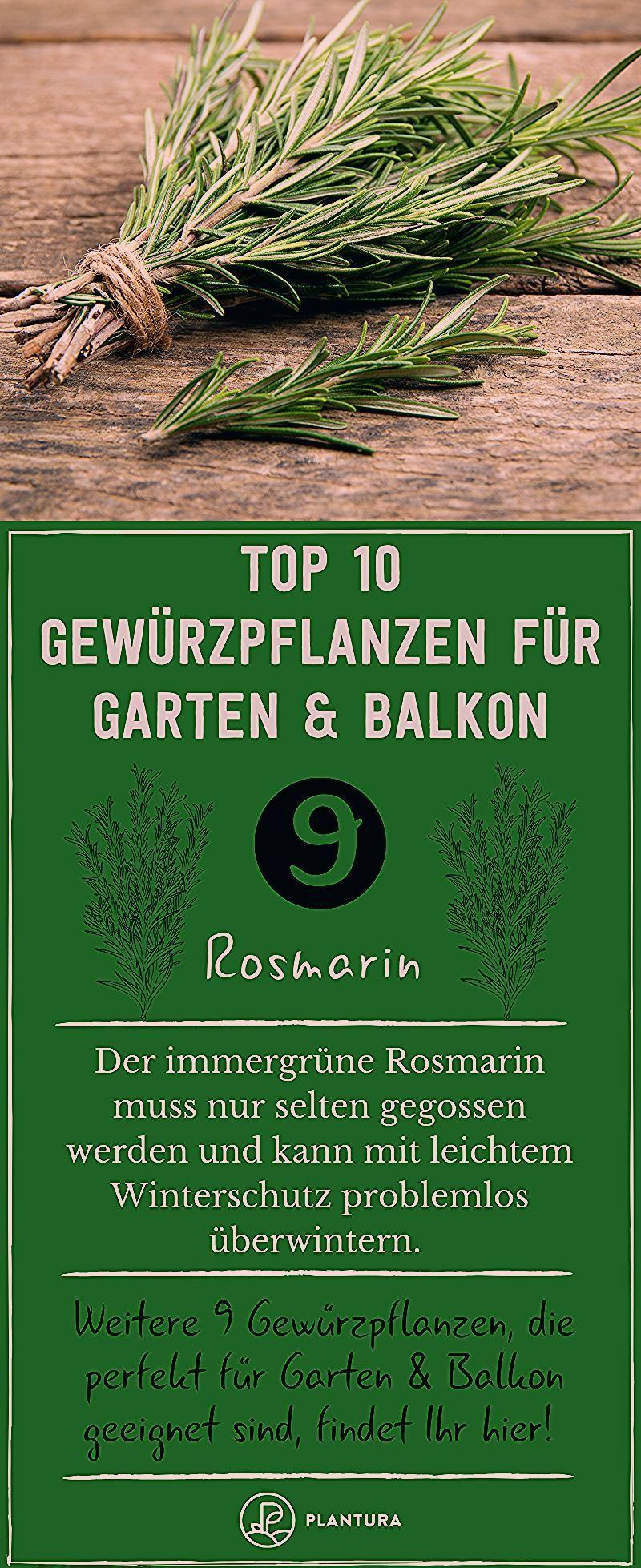 Photo of Gewürzpflanzen: Die 10 besten für Garten & Balkon – Plantura