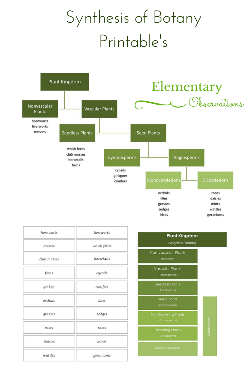 worksheet Classification Of Plants Worksheet this post has been sitting in my draft box for some time waiting to be finished i was prompted by friends request a pla