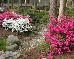 Rhododendron Garden Design Google Search With Images