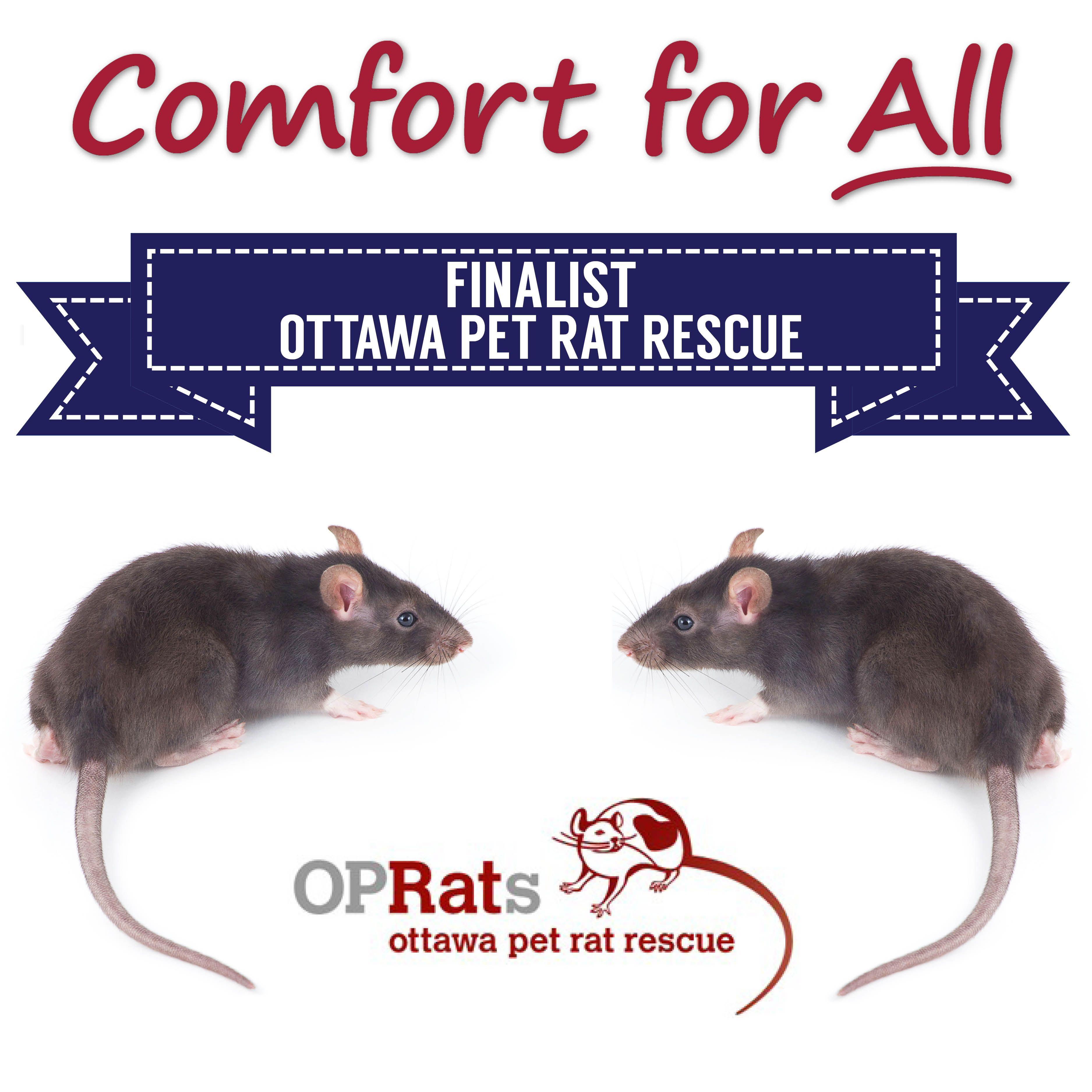 Comfort for All Finalist Ottawa Pet Rat Rescue Pet rats