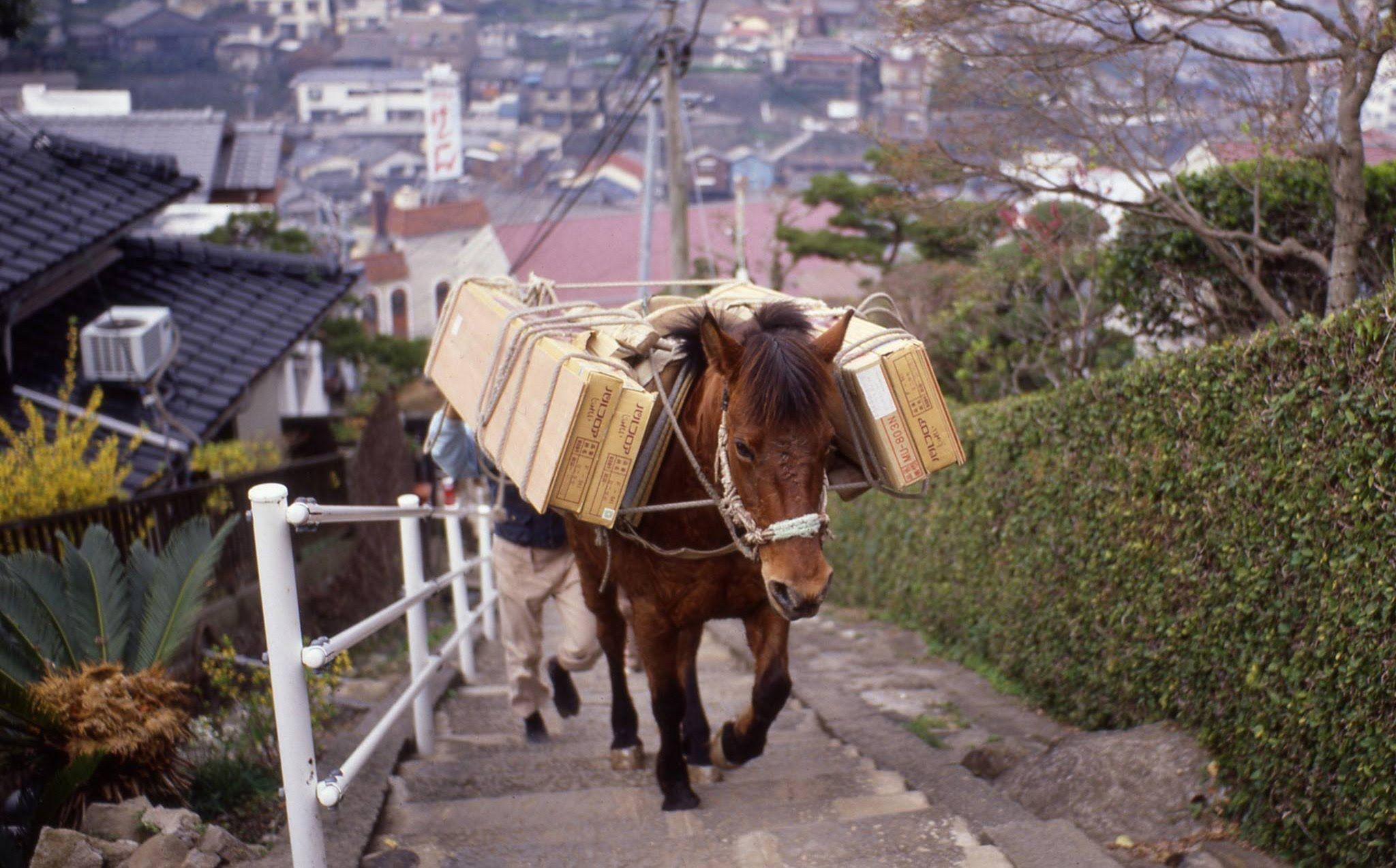 長崎の坂段で荷運びをする対州馬と その生まれ故郷 対馬での様子 対馬 長崎 馬