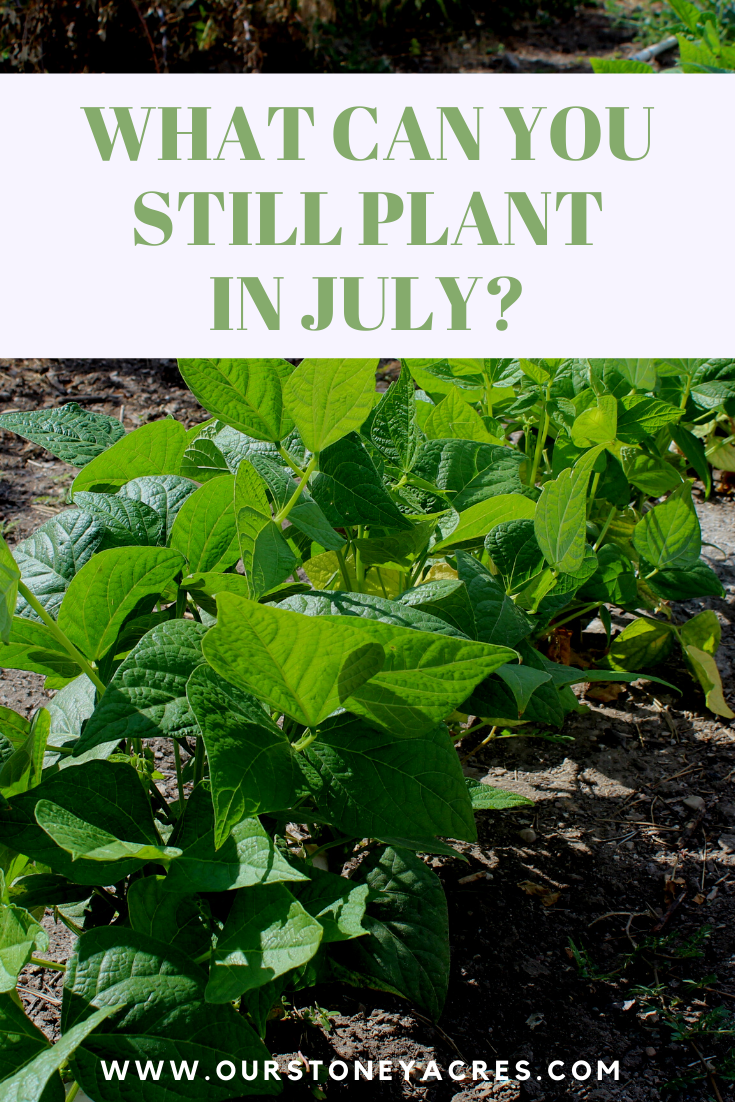 What Can You Plant In July And Still Get A Harvest Plants Planting Vegetables Food Garden