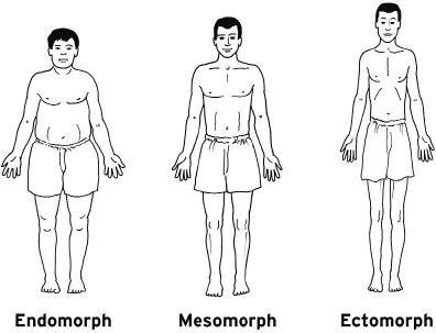 body composition and somatotype of