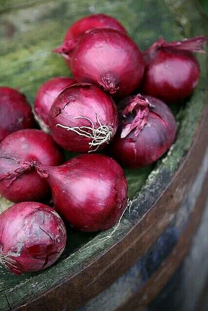 De Ree Beetroot Boltardy Vegetable Plant 250 Seeds