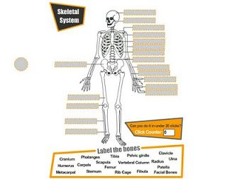 i Teach With Technology: The Skeletal System Online Activities