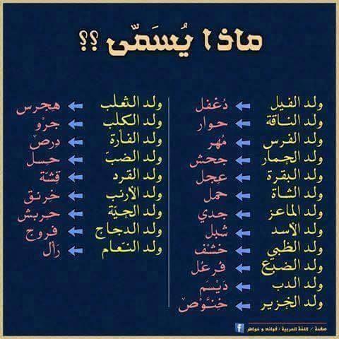 Babydieren Arabische Taal Taal Onderwijs