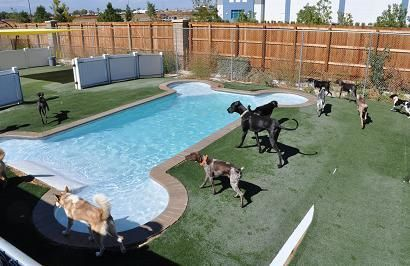 How fun for the doggies. Dog pool, Outdoor dog