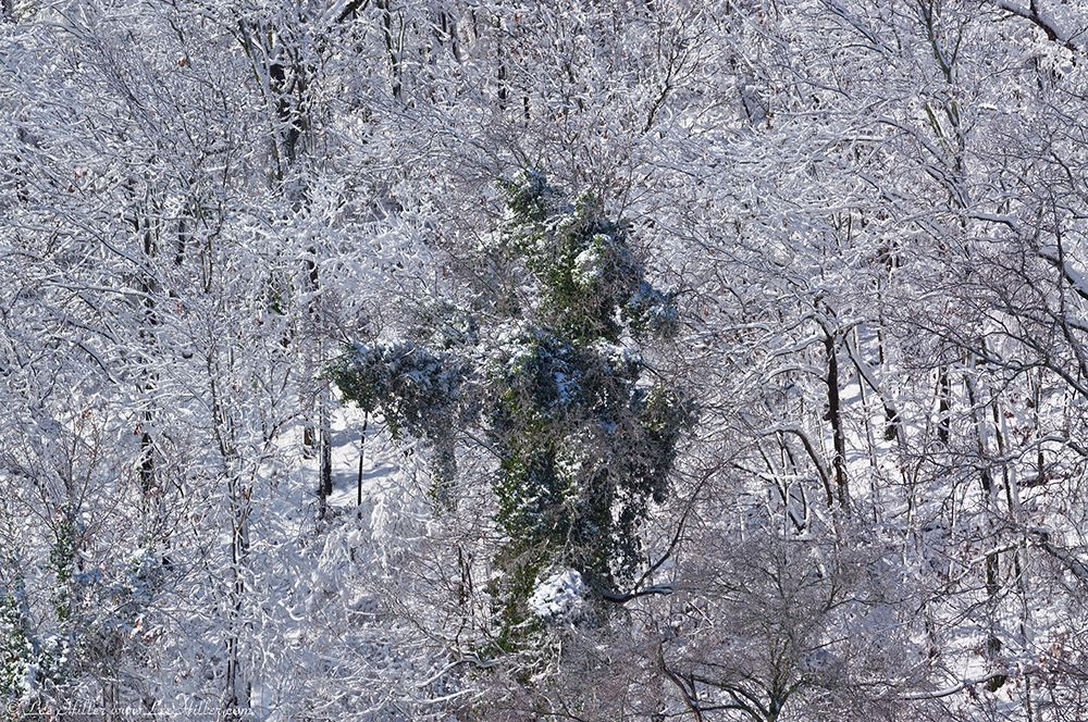 Hot Springs National Park View of West Mountain Snow Tree Monster