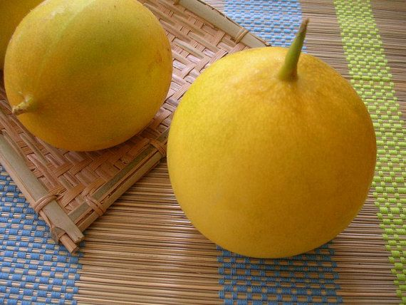 Dosakai Melon Cucumber Seeds Cucumis melo by ...