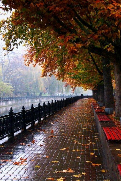 Bancos no parque. Outono
