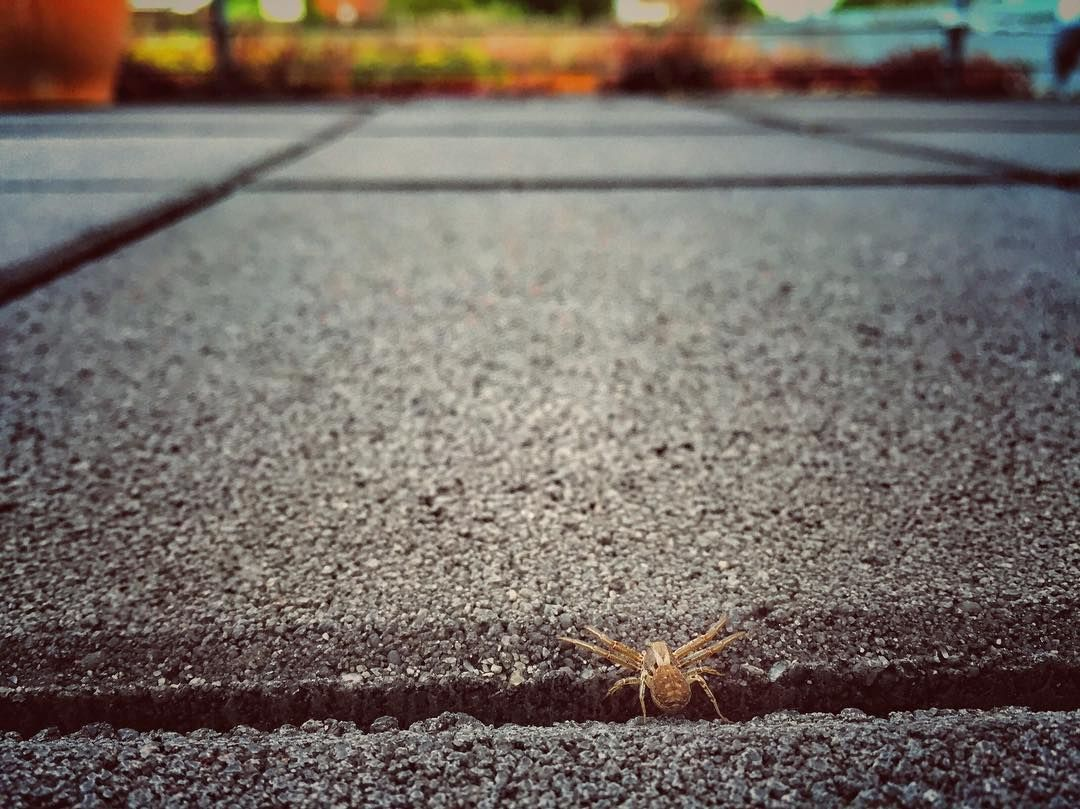 #Spider #spinne #terrace #terrasse #makro #macro #tile #itzybitzyspider #itsybitsyspider #iphone #shotoniphone6 #snapseed #filter #tiltshift by scorpionpat