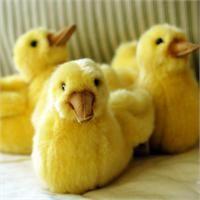 beautiful stuffed animals