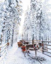 25 Trendy Photography Nature Animals Winter Wonderland