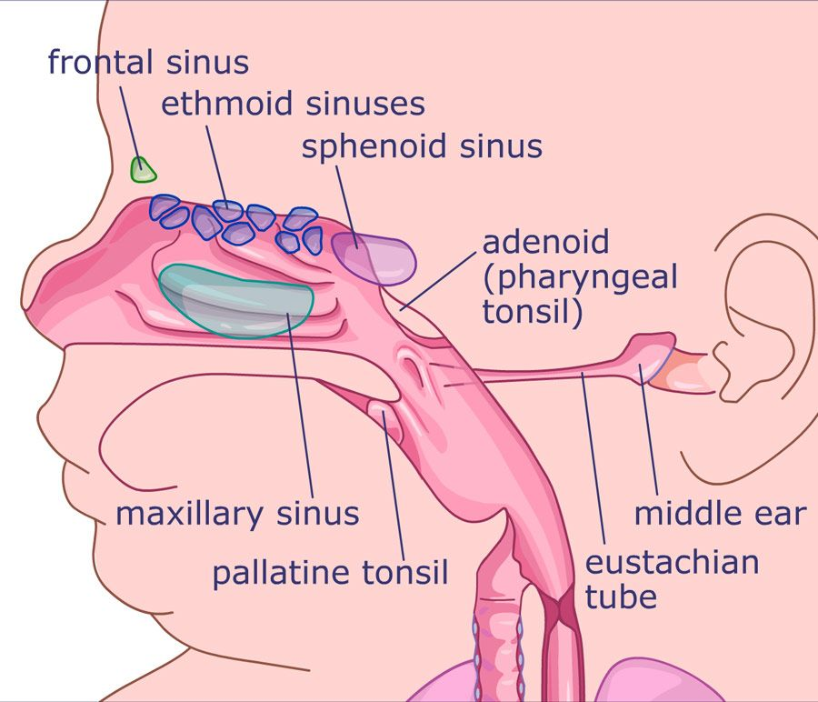 Eer And Ear Nose And Throat Symptoms A Major Cause Of Ear