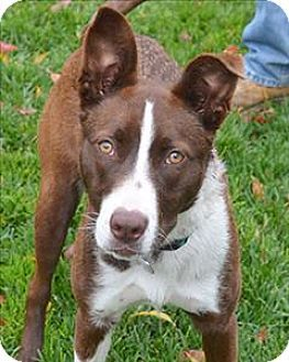 Pin By Crafty Fox On Border Collie Mixes Pinterest Dogs Border