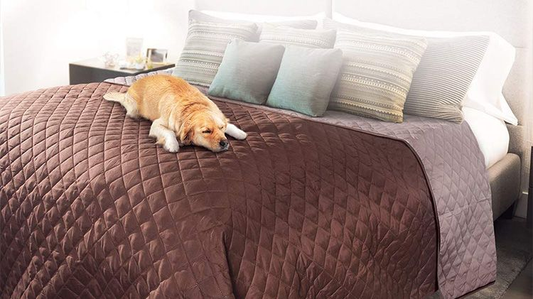 how to wash a dog bed cover