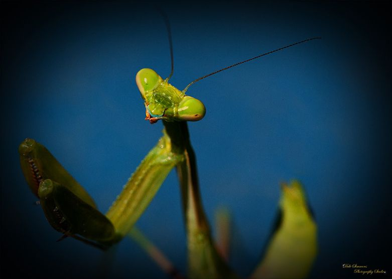 Here's Looking at You-Macro Photography