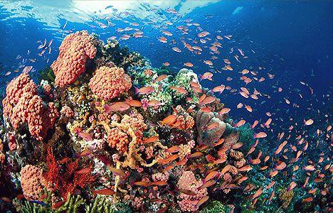 Anilao Beach Resorts My Resorts Batangas Mergui Archipelago Underwater World Most Beautiful Beaches
