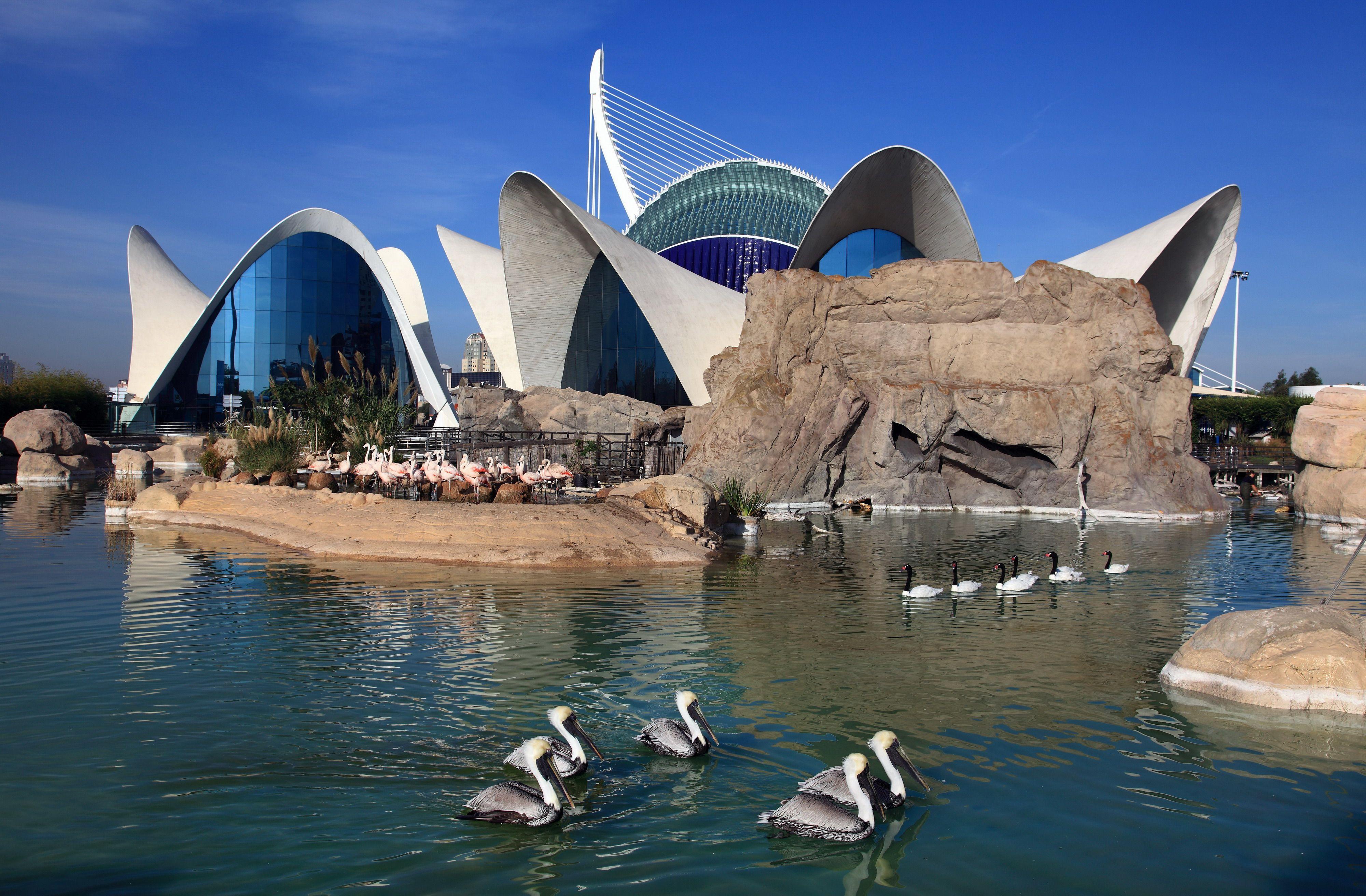 Oceanogràfic Ciudad De Las Artes Y Las Ciencias Valencia Www Cac Es Arquitectura De España Ciudad De Las Artes Valencia
