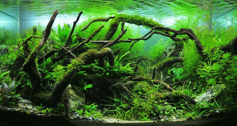 Pin by hubert sobczak on akwaria pinterest aquariums tropical