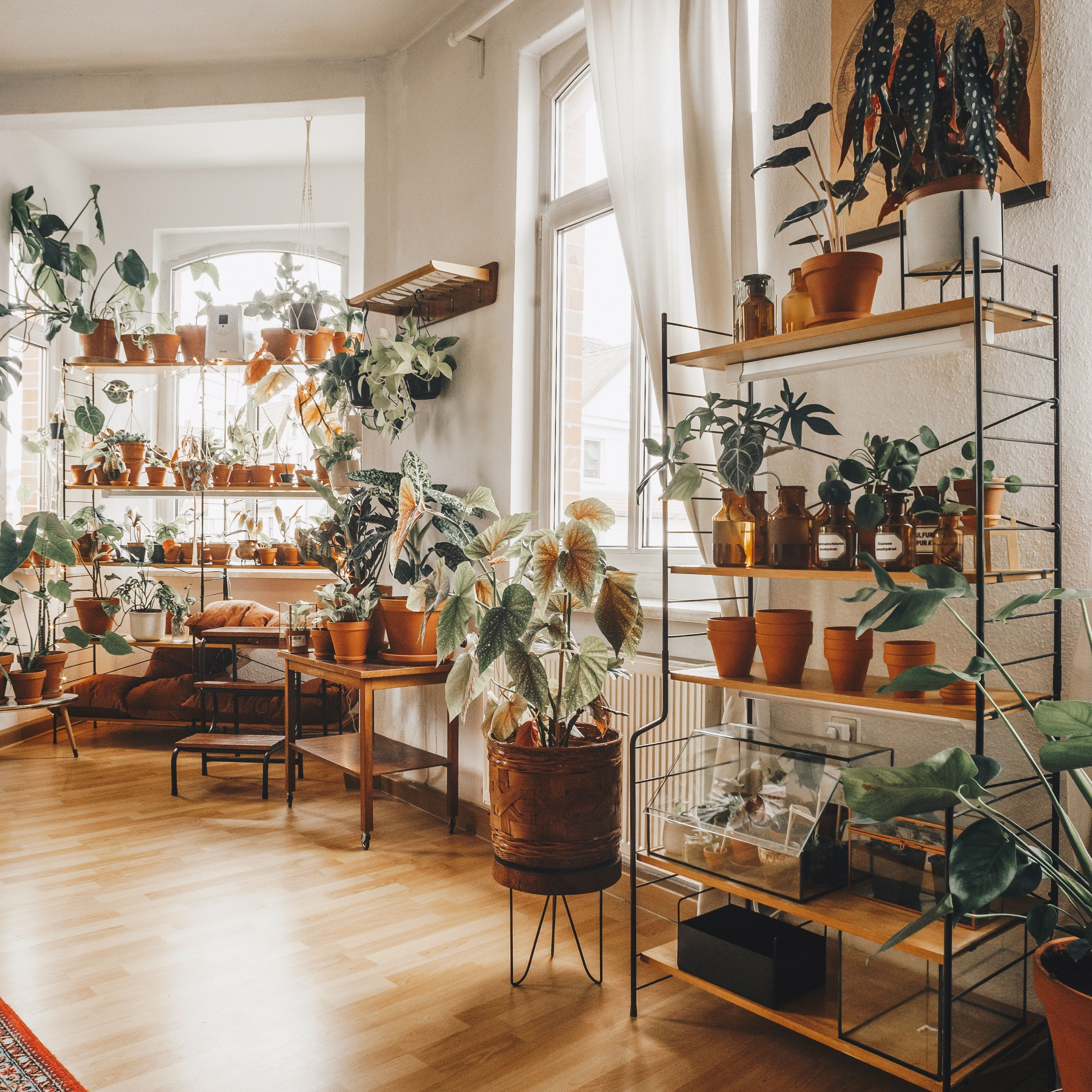 House Plants For Shady Rooms: Pin By Camille Kaplan On For The Home In 2020