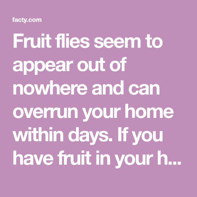 Fruit Flies Seem To Appear Out Of Nowhere And Can Overrun Your Home Within Days If You Have Fruit In Your House That Has Begu Fruit Flies Fruit How To Get