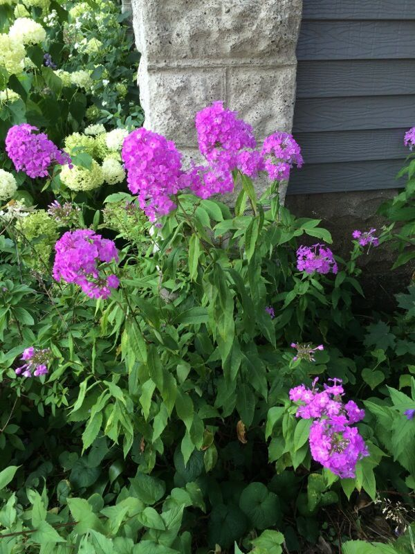 Free Plant Identification With Images Perennials Attract