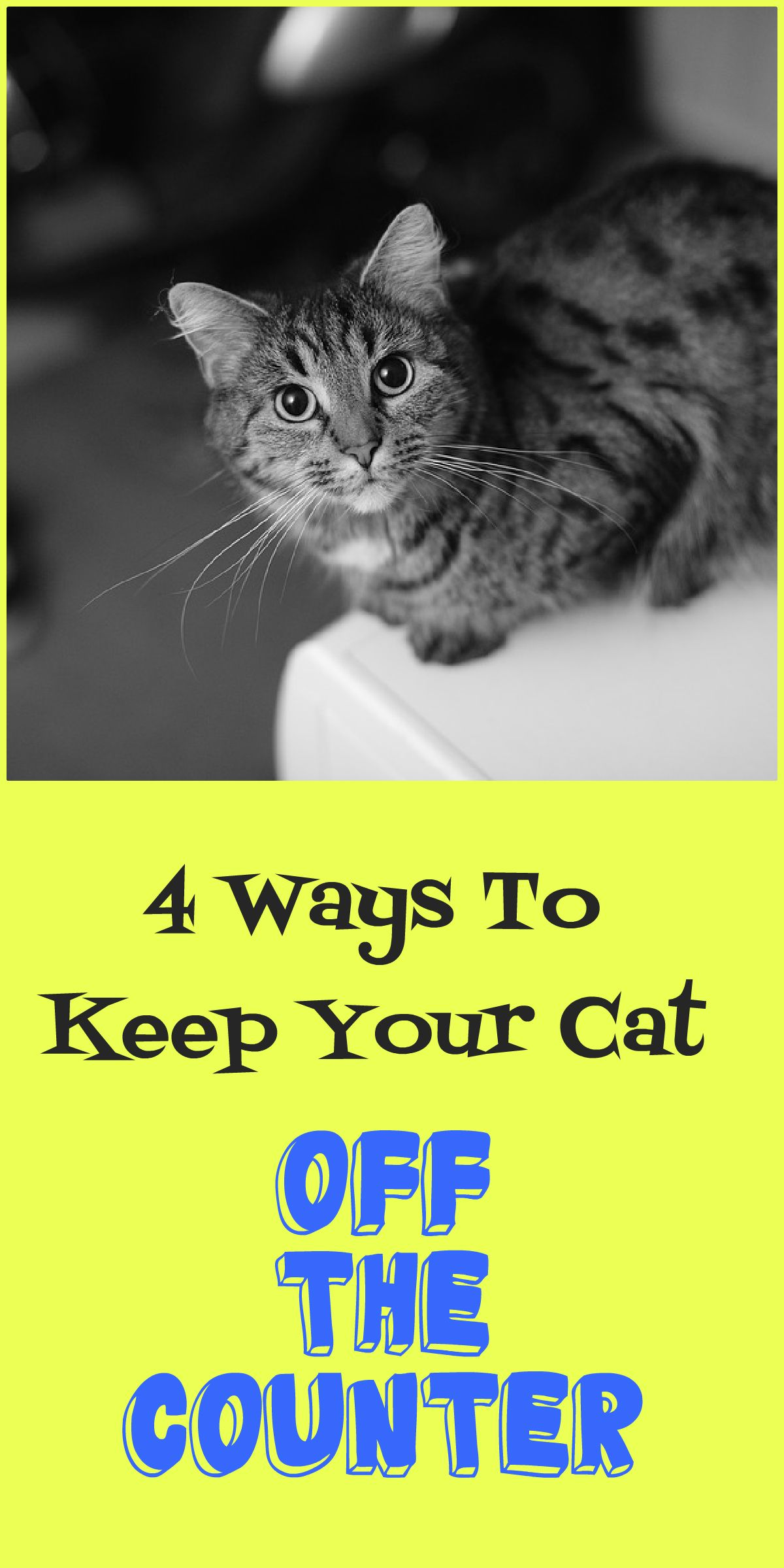4 Proven Ways To Keep Your Cat Off The Counter