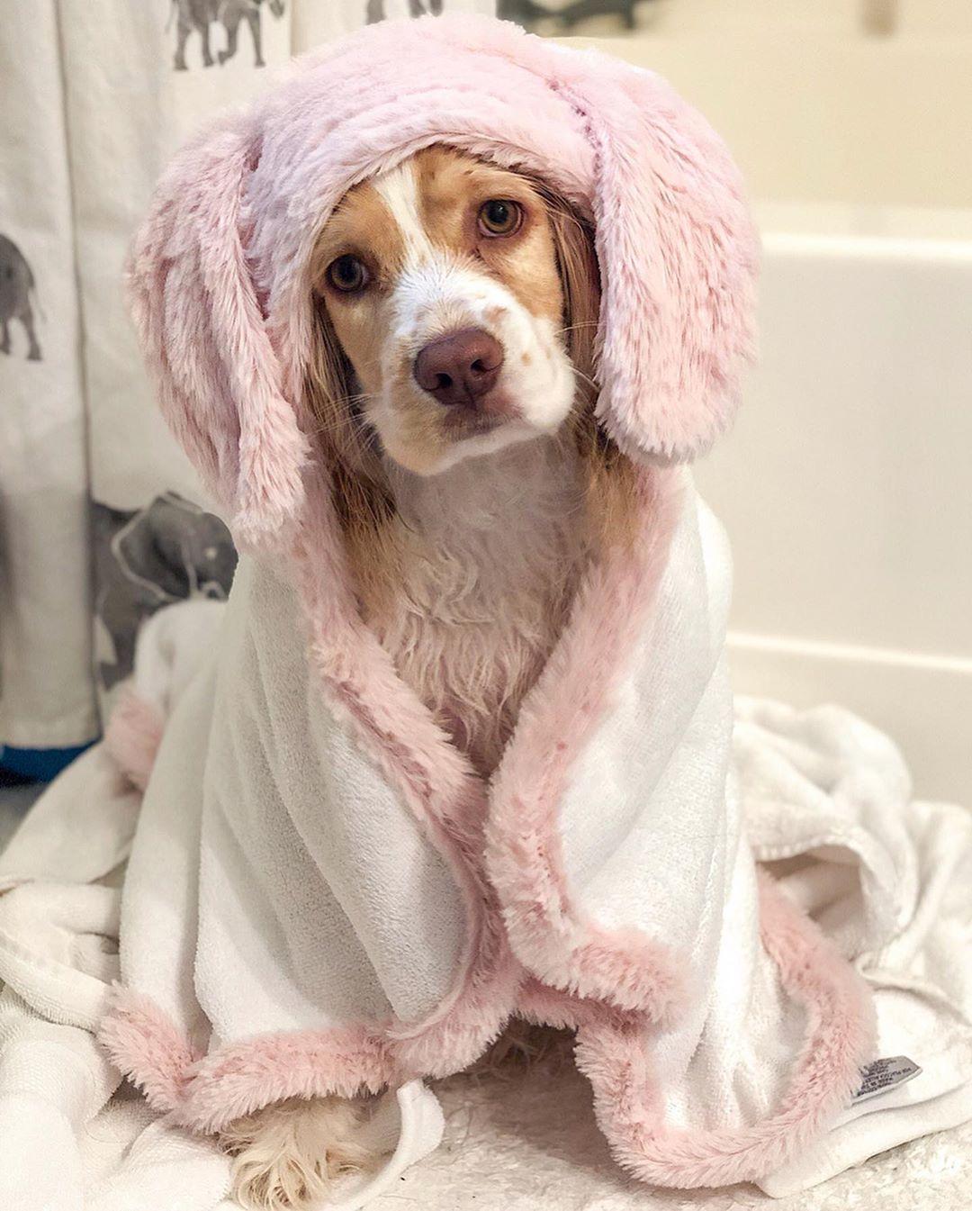 Who Else Loves Towel Rubs After Bath Time