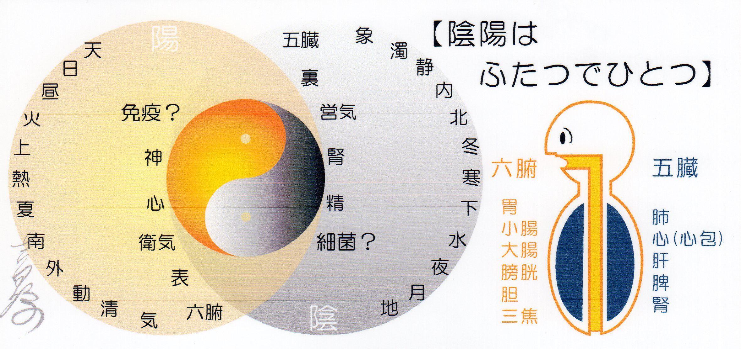 陰陽論 -Yin Yang theory- | 陰陽, 陰陽 五行, 経絡