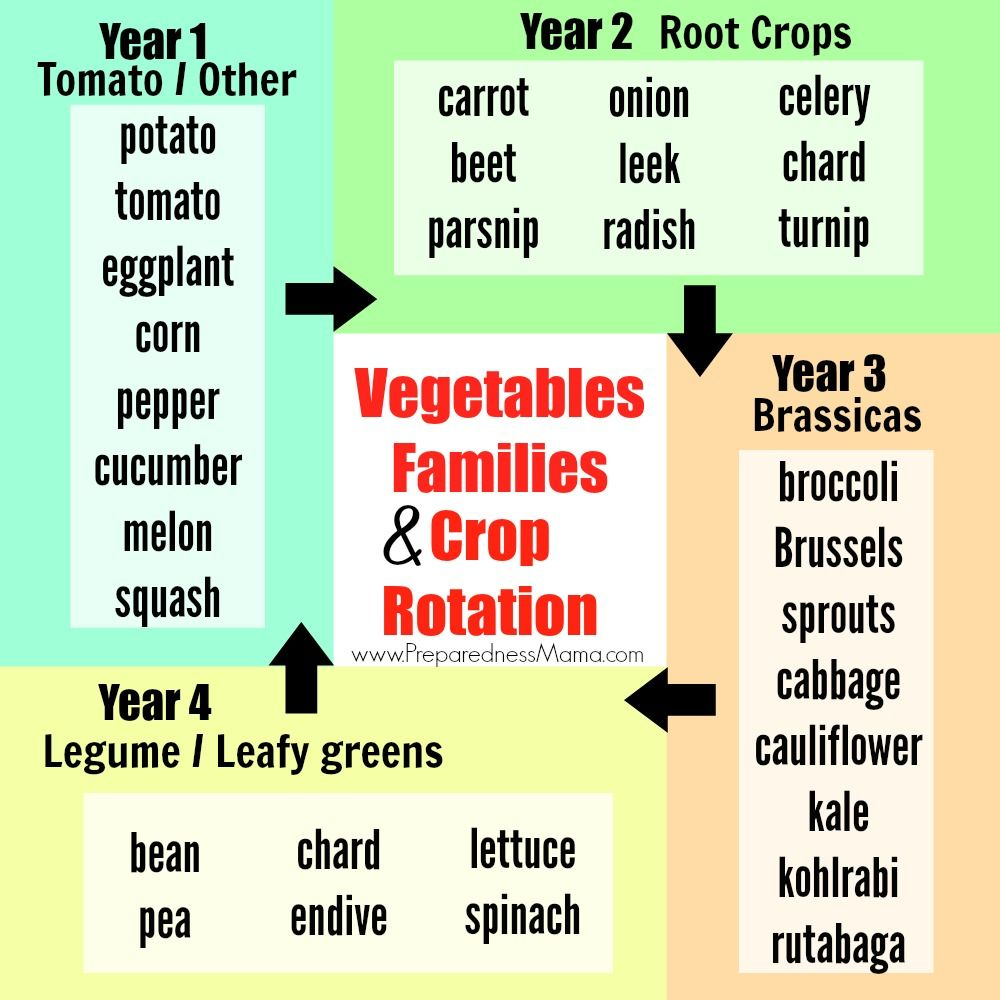 Vegetable Families And Crop Rotation Crop Rotation Garden Soil Growing Vegetables