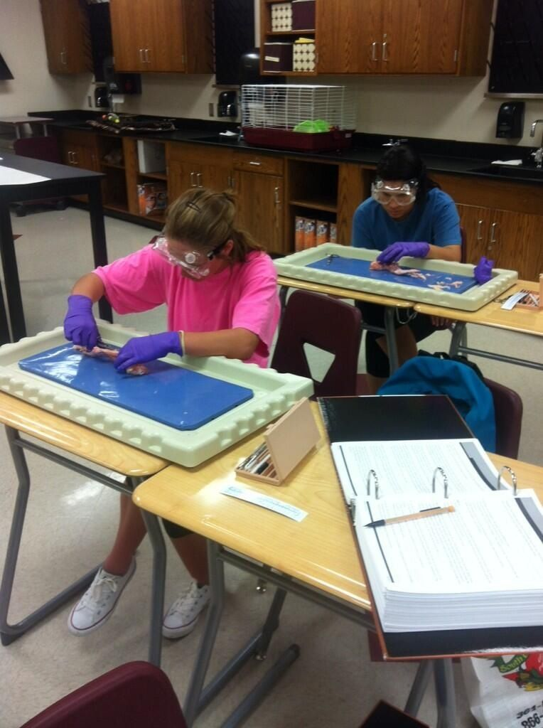 Chicken Wing Dissection Lab How Organs And Tissue Work Together