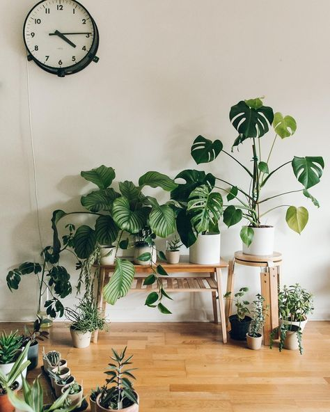 Fresh Indoor Plants Decoration Ideas For Interior Home: Urban Jungle Plants Plant Styling