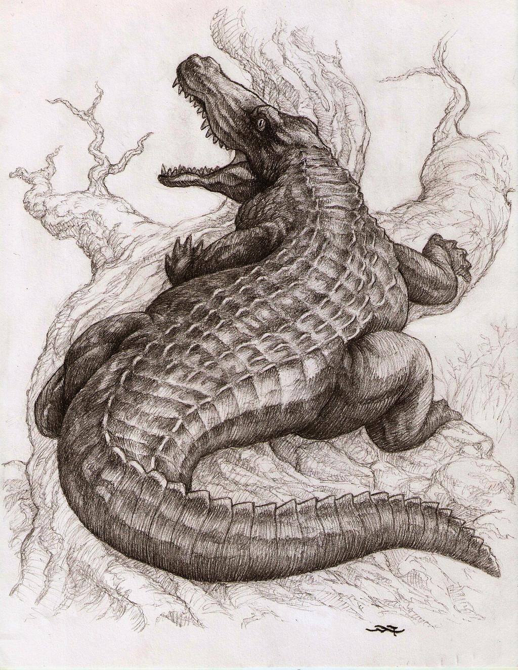 Realistic Alligator Drawing : realistic, alligator, drawing, CROCODILE, Adanart, DeviantArt, Alligators, Crocodile, Illustration,, Pencil, Drawings, Animals