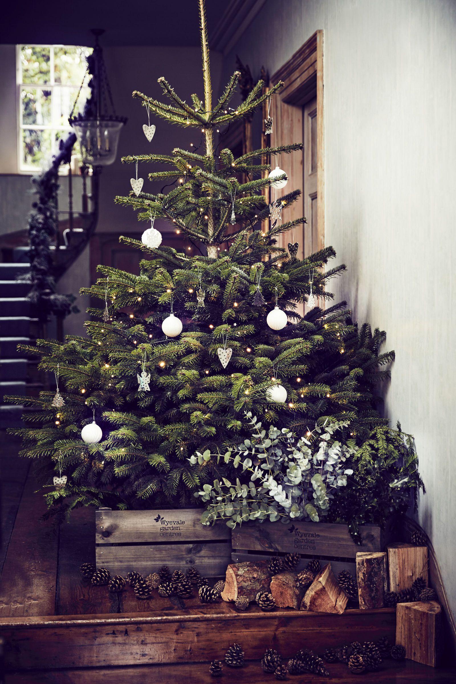 Christmas Trees Buying Choosing Preparing Maintaining Con