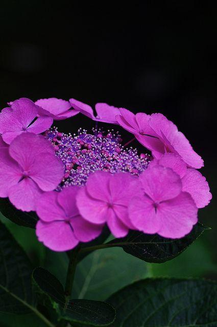 envoyer un bouquet de fleur pas cher 73 fleurs bouquet photos fleurs pinterest hydrangea. Black Bedroom Furniture Sets. Home Design Ideas