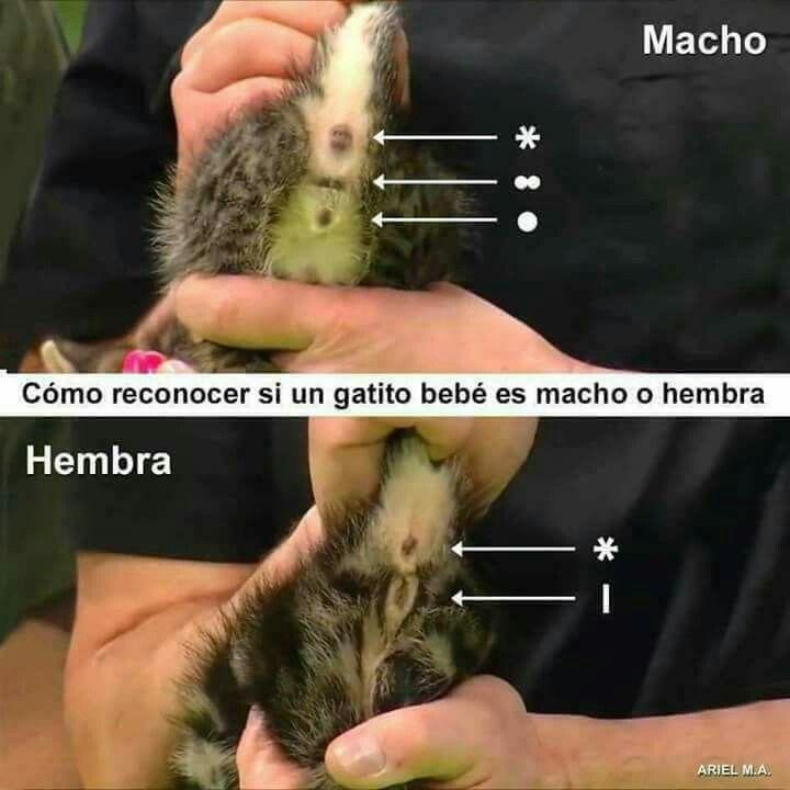 Pin De Monica James En Gatitos Cuidar Animales Hembras Curiosidades Animales