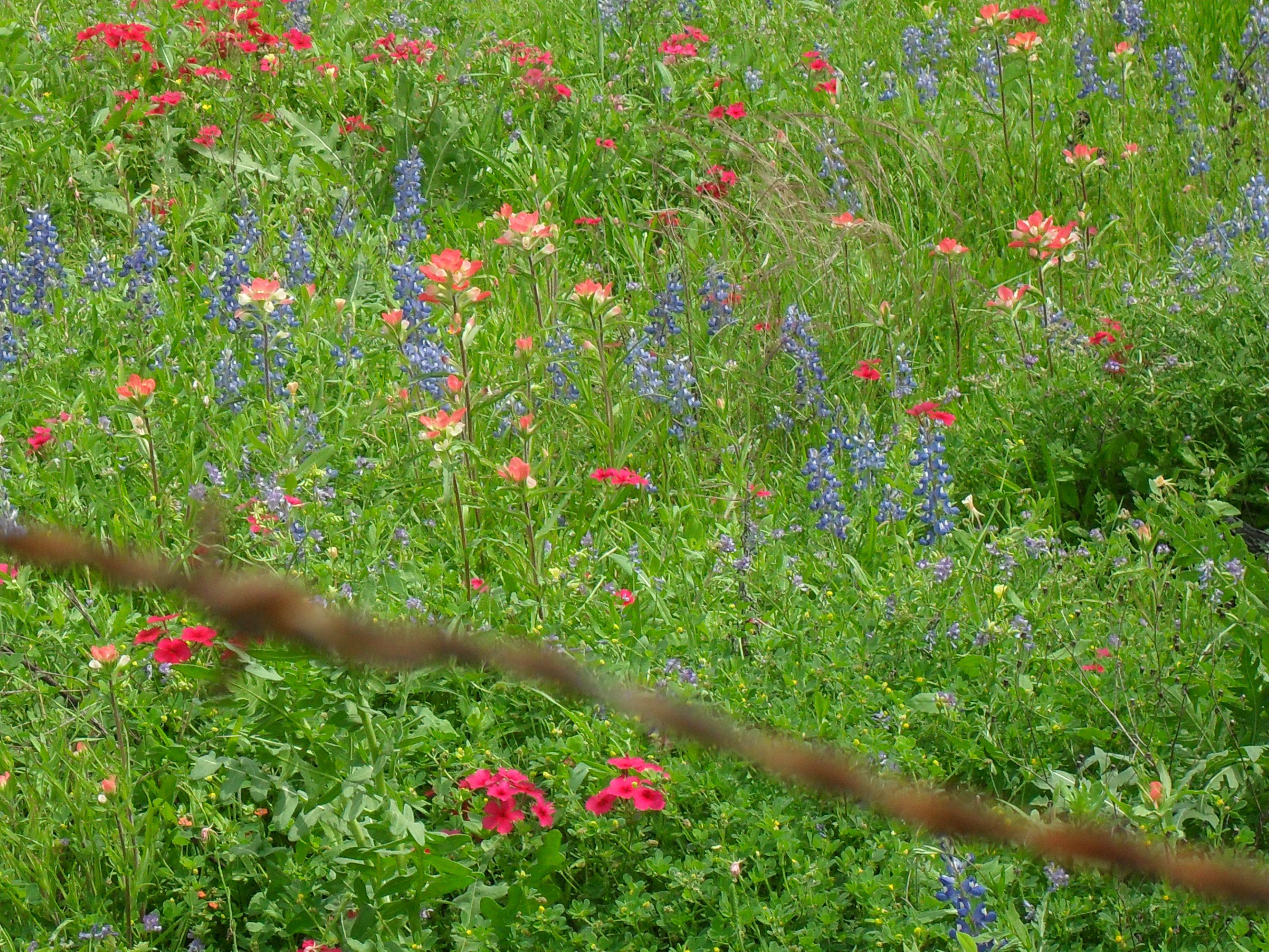 Texas wild flowers Garden inspiration, Wild flowers
