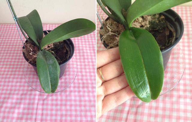 Como deixar folhas brilhantes, cuidados com as plantas/ plats care