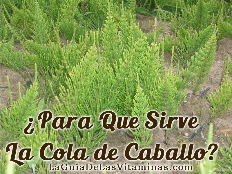 Propiedades De Las Plantas Para Qué Sirve La Cola De Caballo La Guía De Las Vitaminas Medicinal Plants Herbalism Plants