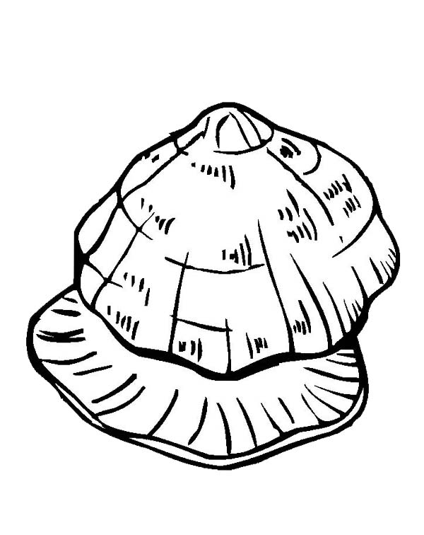 Unique Beaded Periwinkle Seashell Coloring Page Download Print Online Coloring Pages For Free Color Online Coloring Pages Coloring Pages Online Coloring