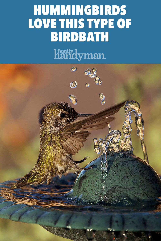 Hummingbirds Love This Type of Birdbath
